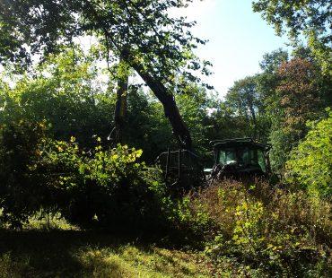Gelände des Gnadenhofs