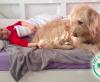 Gefährten mit Spürsinn – Therapiehundestunden für Lea