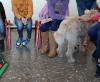 Tiergestützte Förderung in Internationaler Klasse der Realschule Jöllenbeck