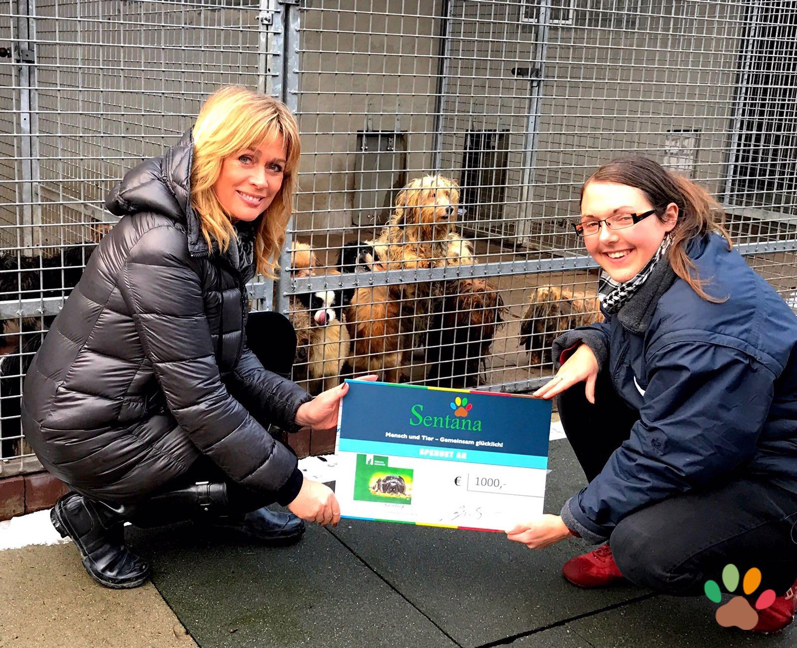 1000€ für 49 verwahrloste Hunde