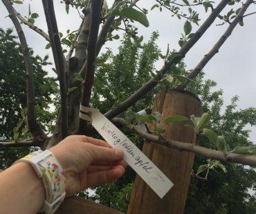 Dorf Sentana - Apfelbaum