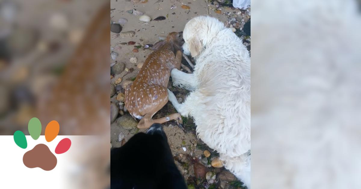 Hund rettet ertrinkendes Rehkitz aus Hafenbucht