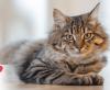 Weltkatzentag: Danke, dass es euch Katzen gibt!
