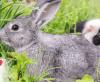 Mythen und Fakten rund um die Tierhaltung: Kaninchen