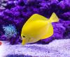 Mythen und Fakten rund um die Tierhaltung: Fische
