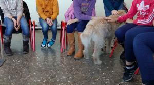 Realschule Bielefeld Tiergestützte Förderung