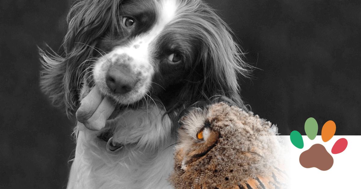 Wo Hund und Eule sich einen Gute-Nacht-Kuss geben.