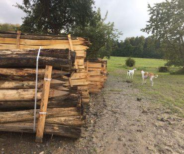Zaunpfähle für die Weide