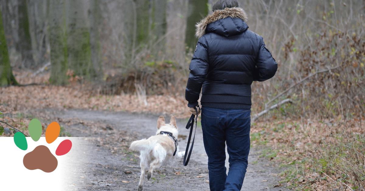 Ein Mann geht an einem herbstlichen Tag mit seinem Hund im Wald spazieren.