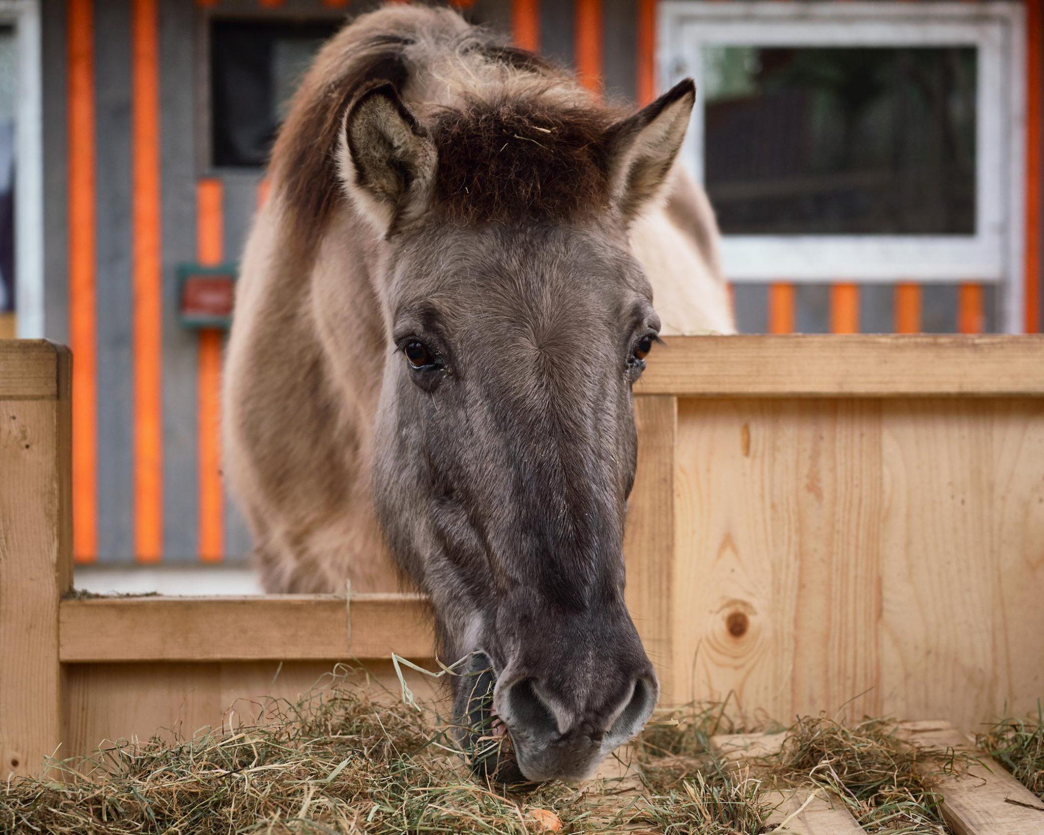 Pferdefutter für unsere Ponys & Esel