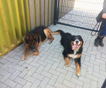 Jerry & die HuTa-Hunde