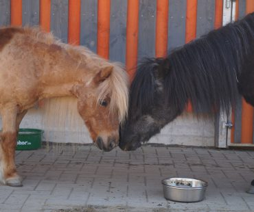 Quinny & Moritz