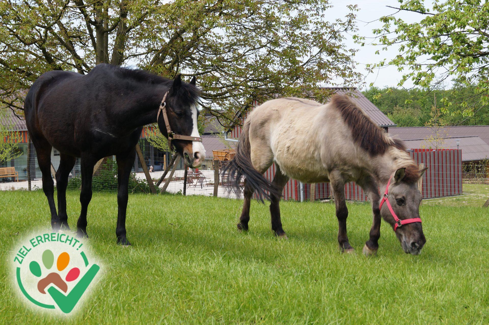 Ein Paddock-Trail für unsere Ponys