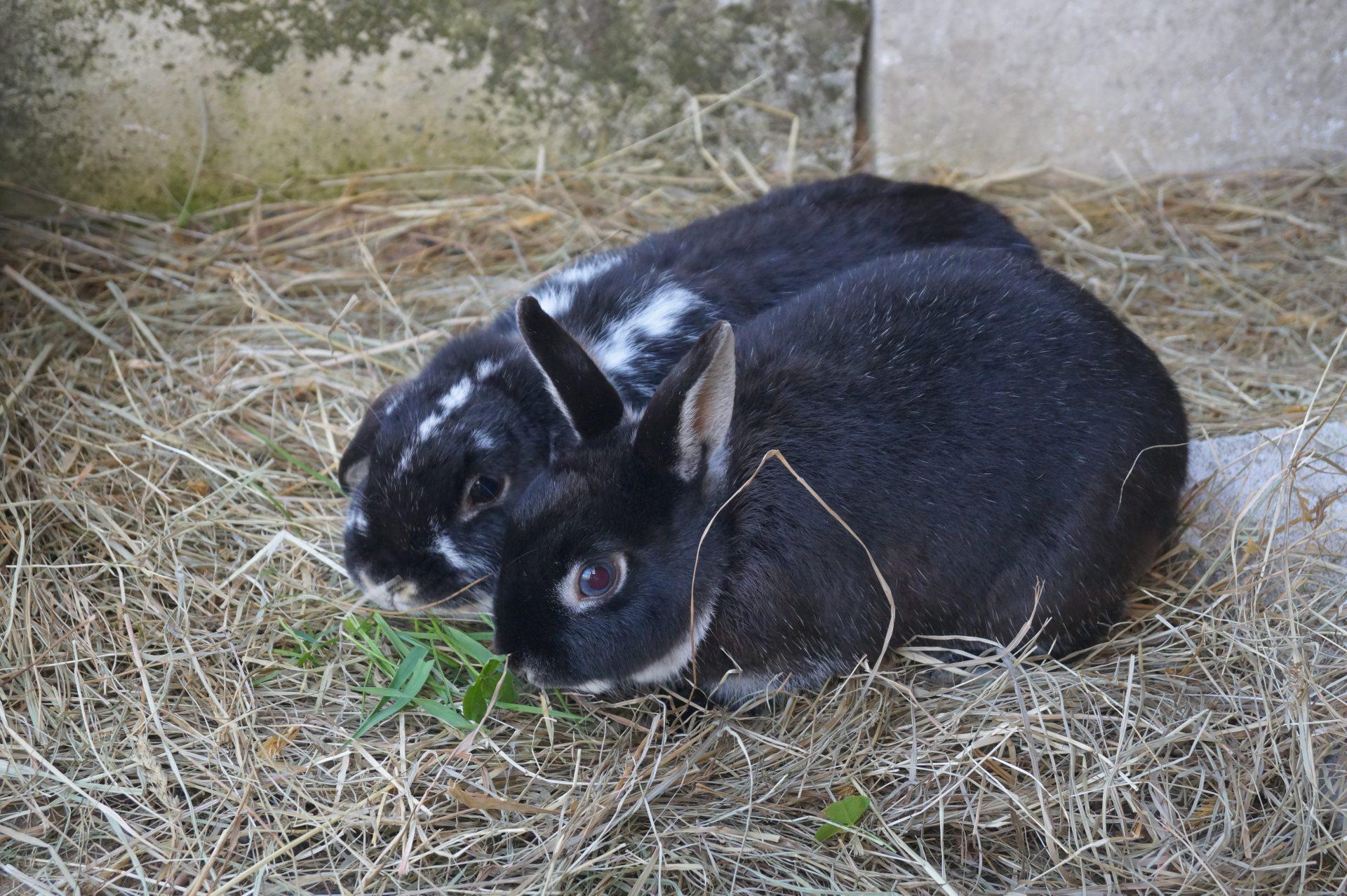 Ein Kaninchenleben