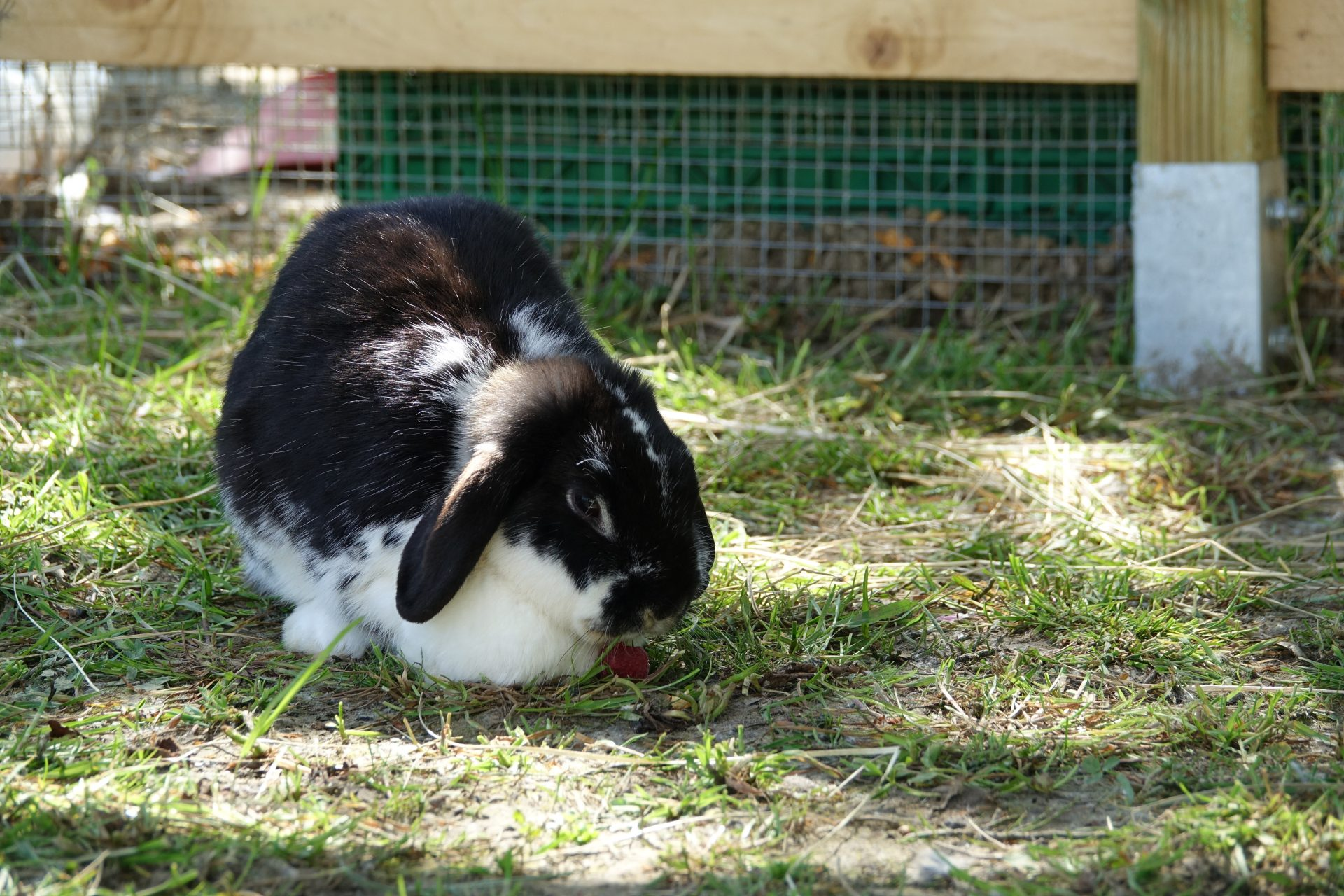Kaninchenhaltung im Frühling