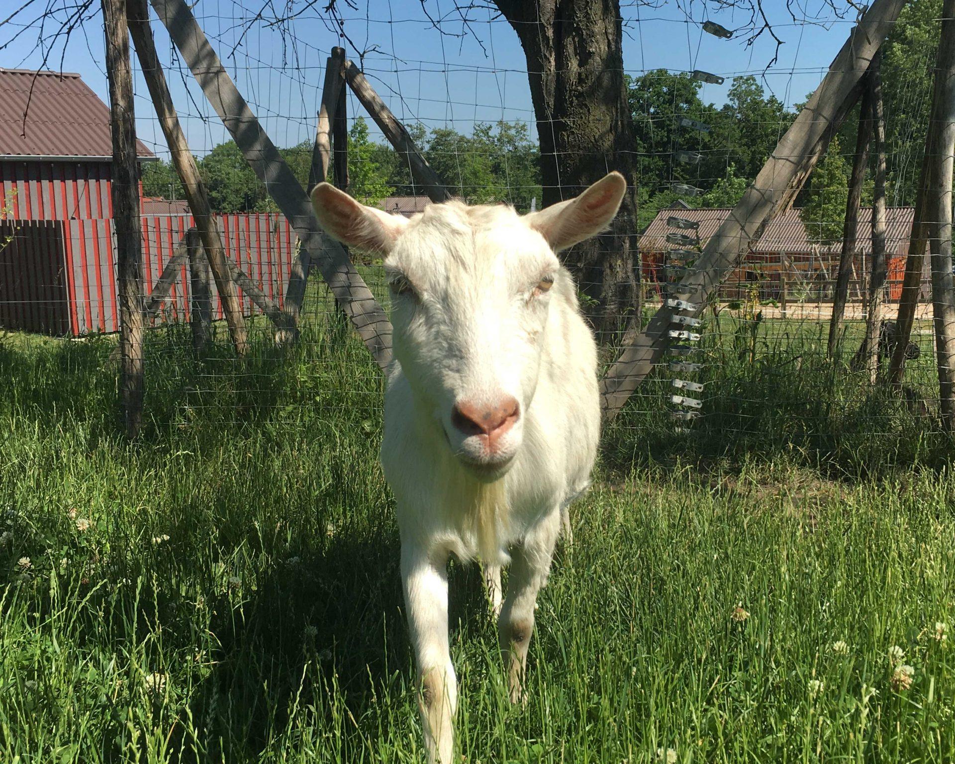 Tierarztkosten für unsere alten und kranken Tiere
