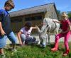 Sommerferien auf dem Hof