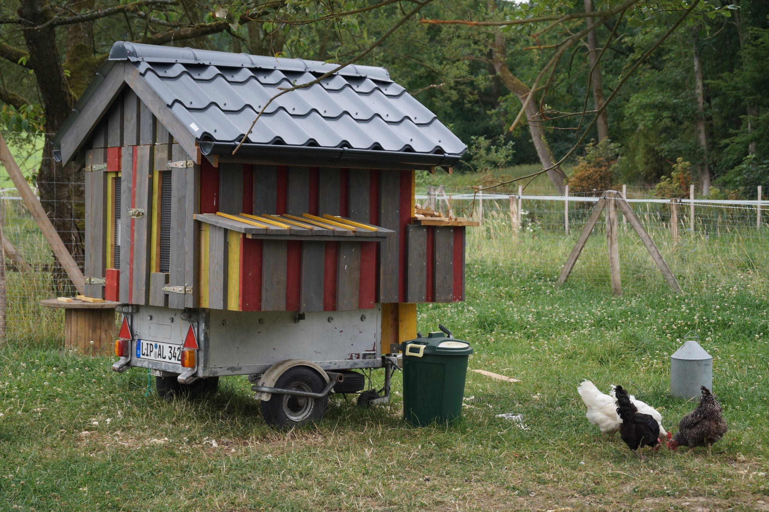 Mehr Hühnern ein neues Leben schenken: Helfen Sie uns!