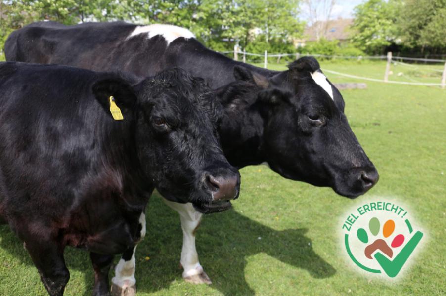 Ein Fressgitter für unsere Kühe
