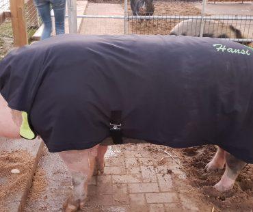 Hansi mit maßgeschneidertem Mantel