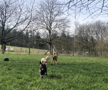 HuTa-Hunde