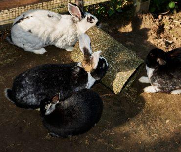 unsere Kaninchengruppe