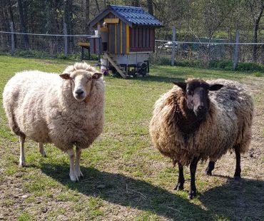 Gertrud & Jojo