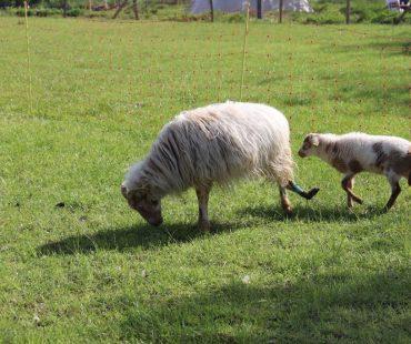 Curry mit ihrem Lamm