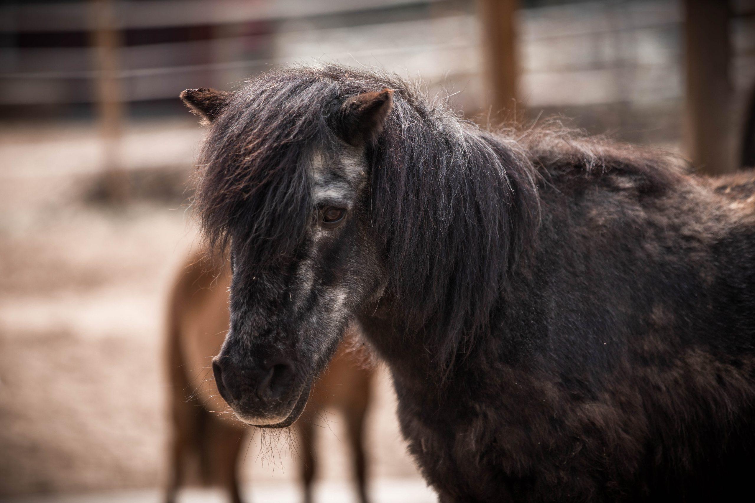 Zahnkontrolle bei den Ponys und Eseln