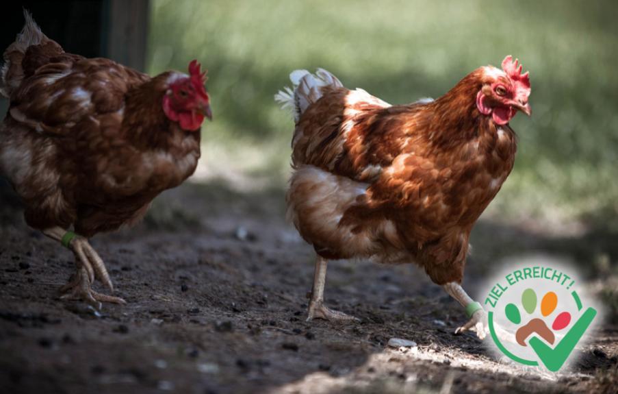 Ein Futterautomat für die Hühner
