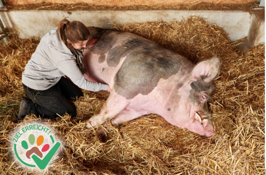 Tierarztbesuch bei Hansi