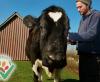 Leinenstroh für die Esel und Rinder