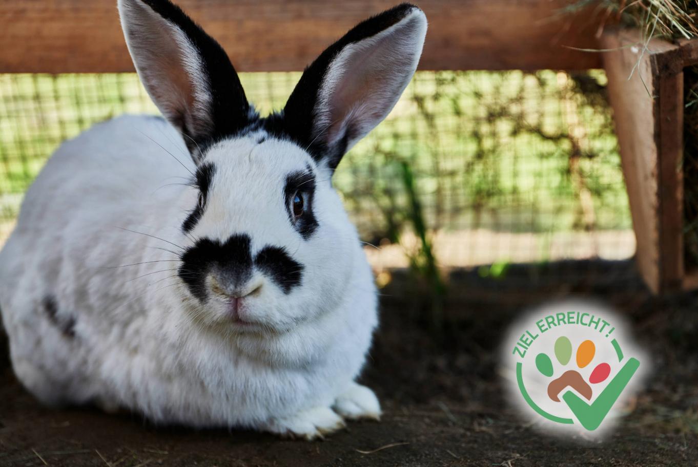 Impftermin der Kaninchen