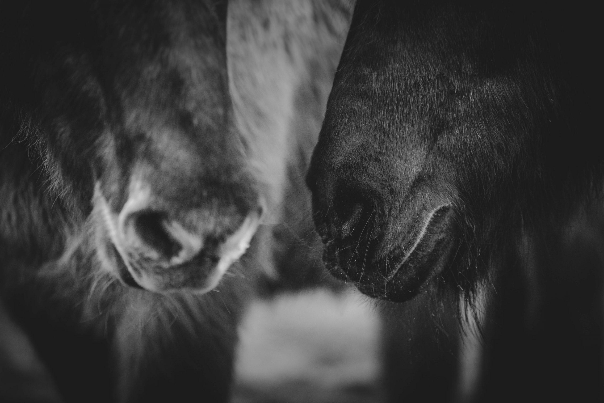 Macht mit: Großer Tierglück-Wettbewerb