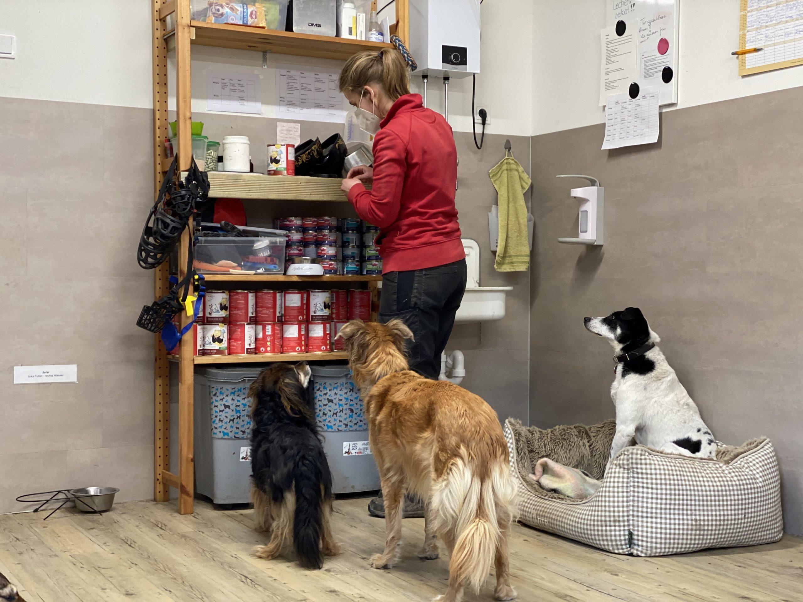 Eine Küchenzeile für unser Hundehaus