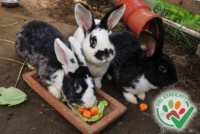 Erweiterung des Kaninchengeheges