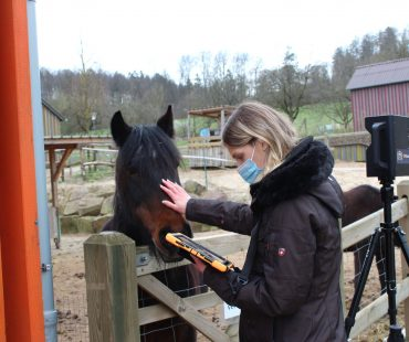 Jenny und Pferdchen