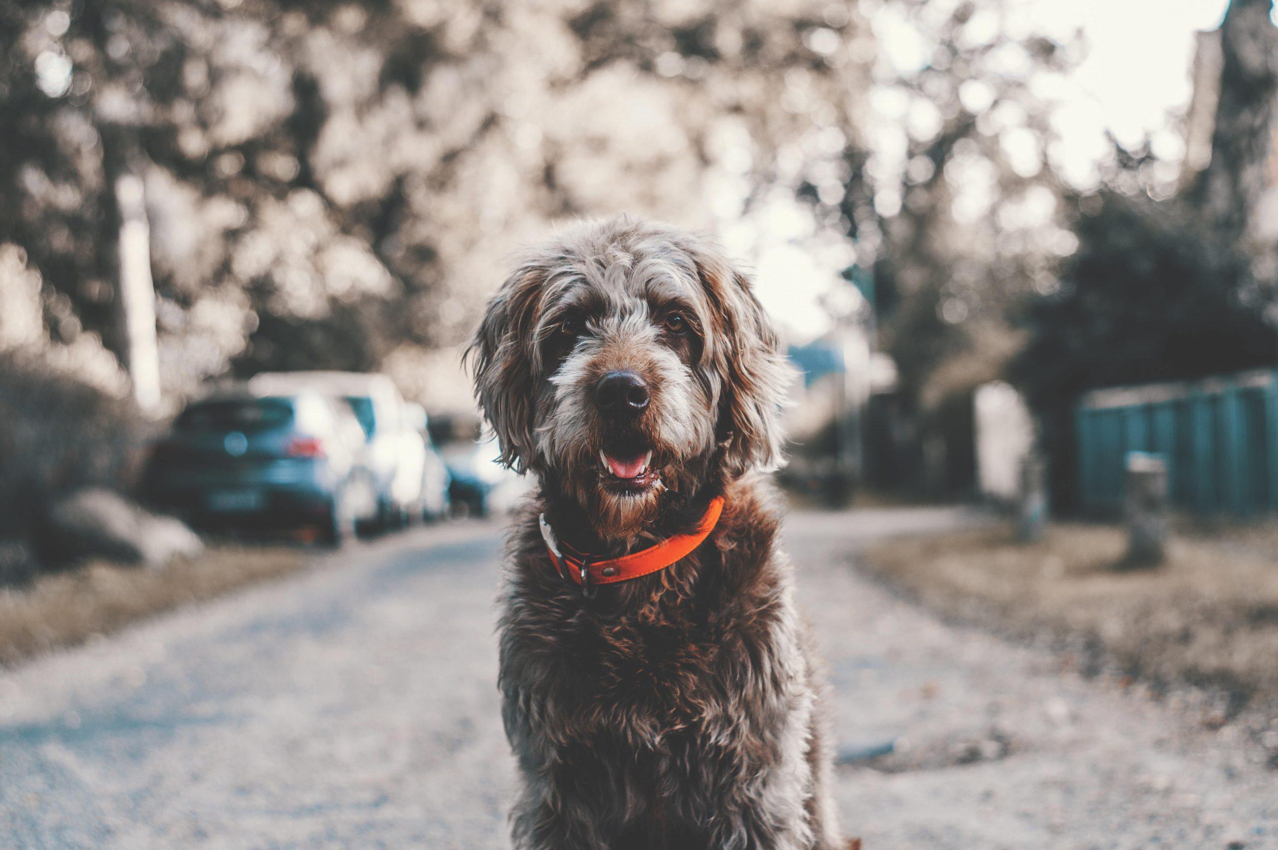 Die 5 häufigsten Krankheiten beim Hund